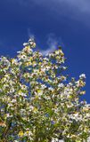 Flowers and sky. Small flowers and blue sky stock photography