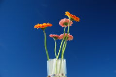 Orange flowers against a blue sky in a vase. Spring orange flowers vase, against a blue sky stock image