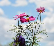 Flowers With Sky Background Royalty Free Stock Photos
