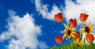 Flowers on the sky background. Image of flowers on the sky background Stock Images