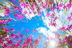 Flowers in the sky with clouds. Stock Photo