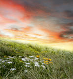 Flowers and sky Stock Photography