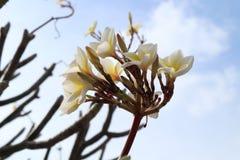 Flowers&Sky royalty-vrije stock afbeeldingen