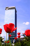 Flowers and sky-scraper Stock Images
