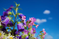 Flowers and sky. Spring wildflowers on blue sky background Stock Photos