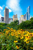 Flowers and skyscrapers at Central Park in New York City Royalty Free Stock Photos