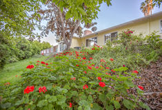 Flowers on a slope of California home in real estate shoot. Outdoors in Southern California homes ready for real estate listings Royalty Free Stock Photos