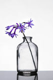 Flowers in small bottle on a table Royalty Free Stock Photography