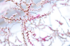 Flowers. Small pink flowers on blue sky background Stock Photography
