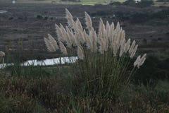 Flowers. Small vegetation in a village of Portugal. São Martinho do Porto. Has some dunes as background Stock Photography