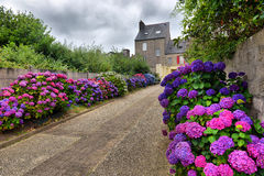 Flowers in a small village, Brittany, France Stock Photography