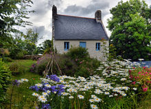 Flowers in a small village, Brittany, France Stock Image