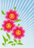 Flowers are smiling sun. Three pink flowers are glad molnechnym rays Stock Image