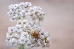 Flowers Snail Royalty Free Stock Photos