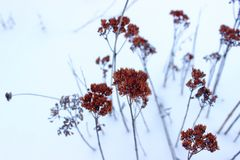 Flowers in snow land Stock Photography