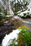 Flowers, snow and river. In a french forest during the spring season. Long exposure Stock Image