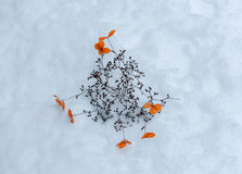 Flowers in a Snowfield Royalty Free Stock Photography