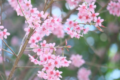 Flowers in soft and blur style. Background : flowers in soft and blur style Stock Photos