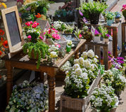 The flowers are sold from a tray on the street. France, Europe Stock Photography