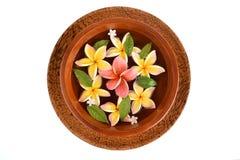 Flowers spa tub, Frangipani flowers spa tub. Royalty Free Stock Images