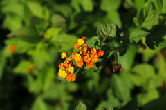 Flowers of Spain. Beautiful flowers of Spain in the garden Royalty Free Stock Image
