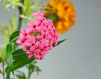 Flowers spike. Stock Images