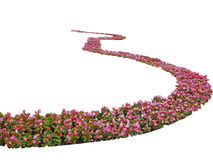 Flowers spiral. Flower-bed on white back ground Stock Photo