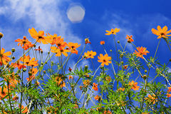 Flowers in spring. Yellow Flowers in spring and blue sky Stock Image