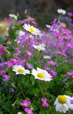 Flowers of spring Stock Photography
