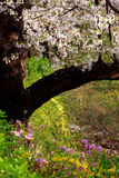 flowers spring Στοκ φωτογραφία με δικαίωμα ελεύθερης χρήσης