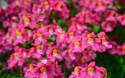 Flowers in spring Royalty Free Stock Photos