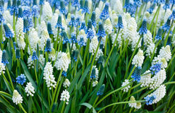 Flowers spring background Royalty Free Stock Photography