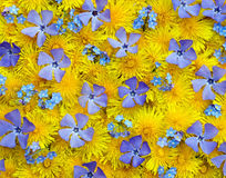 Flowers spring background Stock Photo