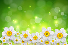 Flowers spring background Stock Photos