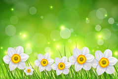Flowers spring background Royalty Free Stock Photos