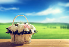 Flowers and spring field Stock Photography