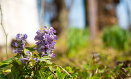 Flowers in spring Royalty Free Stock Photography