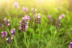 Flowers. In a spring garden Stock Photography