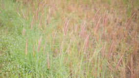 Flowers spring natural background. Grass flowers spring natural background royalty free stock images