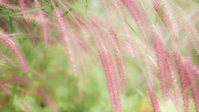 Flowers spring natural background. Grass flowers spring natural background stock photography