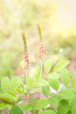 Flowers spring natural background. Grass flowers spring natural background royalty free stock photography