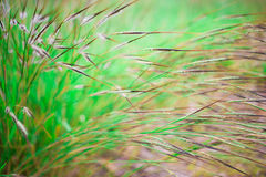 Flowers spring natural background. Grass flowers spring natural background royalty free stock photos