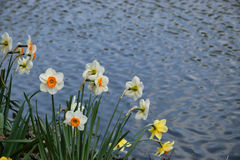 Flowers. Spring flowers on the shore of pond Stock Photography