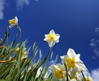Flowers. spring.sky Stock Images