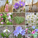 Flowers of springs. Nine slice of the spring blossoms Stock Image