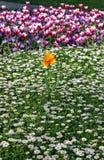 Flowers in springtime stock photo