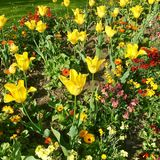 Flowers in the springtime in Spain Royalty Free Stock Photos