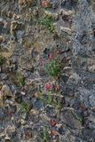 Flowers sprouted through the walls of the old castle. Royalty Free Stock Photography