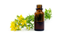 Flowers of St. John's wort, Hypericum perforatum, and a bottle w Royalty Free Stock Photography