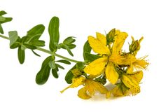 Flowers  of St. John's wort (Hypericum perforatum), isolated on. White background Stock Photography